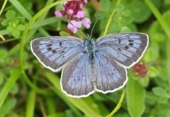 Бабочка, природа, насекомые, макро, зум, HD, фото, картинк…