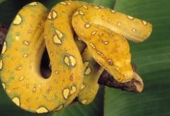 Желтая змея на ветке