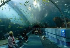 Высокий Аквариум туристическое место в Атланте Джордж…