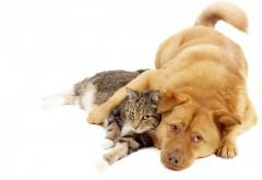 Кошка и собака животный мир обои для рабочего стола