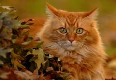 Милый рыжий кот