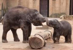 Два молодых слоника