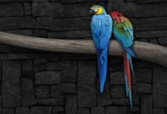 Синий и желтый и Красный ара попугаи