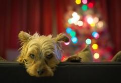 собака, морда, блики, печаль, смотреть