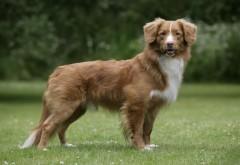 Коричневая собака в траве