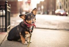 Собака на привязи, город