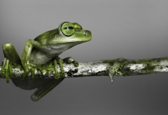 Маленькая зеленая лягушка