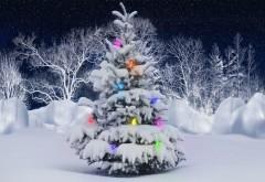 Новогодняя елка в лесу фото