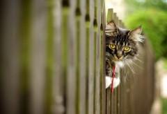 Кот выглядывает через забор