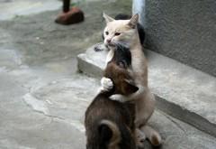 Кот и собака лучшие друзья