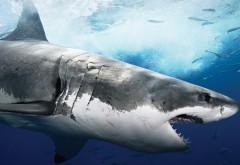 Подводный мир, тигровая акула