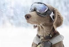 Пёс в лыжных очках