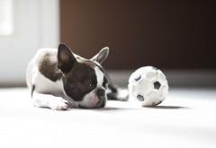 Скучная и сонливая собака
