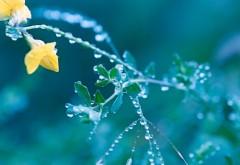 Капли воды природа макро заставки