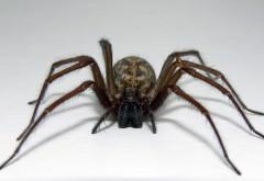 HD милый паук