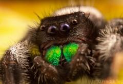 Картинки паука на iphone
