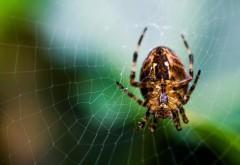 картинки пауки на рабочий стол