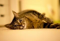 Кошка на полу