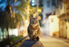 Кошка на парапете