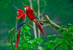 Ара, попугай, птица, Тропики, Фотографии, HD