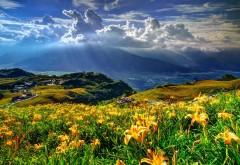 горы, цветы, лилии, деревня, облака, бесплатно