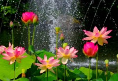 Цветочный сад hd обои