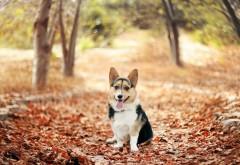 Природа, деревья, Животные, Собака, Опавшие листья, Осень