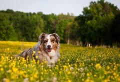 Счастливая собака между цветами