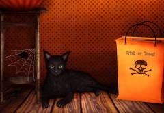 Хэллоуин, черный котенок, праздник, заставки