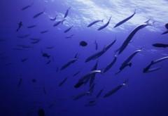 морская фауна фото