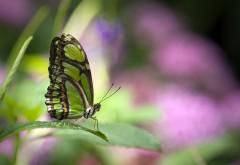 Зеленая бабочка на листке