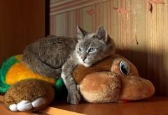 кот обнимая игрушки