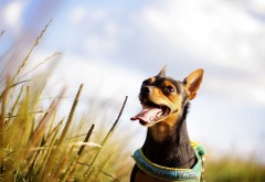 Радостная собака ;)