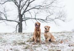 Счастливые собаки на поле