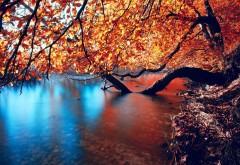Дерево изогнутые в реке