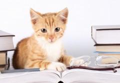милый оранжевый котенок