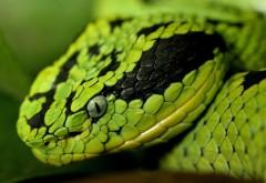 зеленая змеиная голова