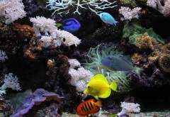 аквариумные рыбки, кораллы