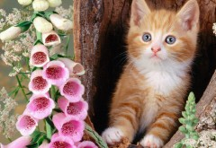 Цветы, кошки, животные, котята, HD