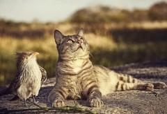 кошка, птица, любопытство