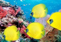 Тропические рыбы, желтые рыбки, каралы, риф