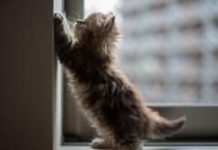 Котенок симпатичный высокого разрешения картинки