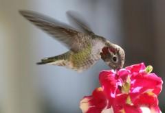 колибри птицы высокого разрешения