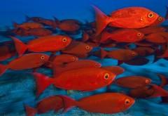 Животные, рыбы, тропический красный, цвет, глаз, подвод�…