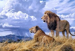 Животные, кошки, лев, пейзаж, дикая природа, Африки, Пара, Любовь, небо, облака