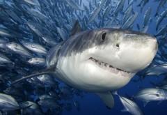 Животные, Акулы, Рыбы, воды, Клыки