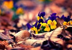 осенние листья цветы