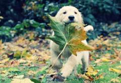 Осенние животные, листья, травы, собаки, щенки, золотис�…