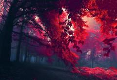 деревья с красной листвой осенью