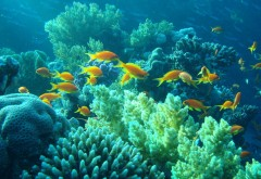 Желтые рыбы в море